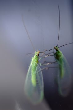My iMac have a bug! by Marek Weisskopf on 500px