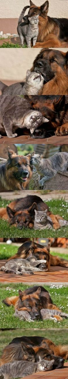 best-friends even though the cat is a pain in his ass
