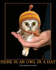 demotivational poster HERE IS AN OWL IN A HAT