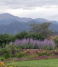 Xeriscape Demonstration Garden in Colorado Springs, a must-see if you are interested in researching xeriscape species and methods