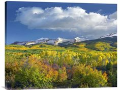 buy Feng Shui fine art photo East Beckwith Mountain flanked by fall colored Aspen forests under cumulus clouds, Colorado at www.explosionluck.com
