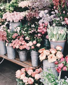 Flowers don't worry about how they're going to bloom, they just open up and turn towards the light! My Flower, Fresh Flowers, Beautiful Flowers, Dried Flowers, Spring Aesthetic, Flower Aesthetic, Wallpaper Flower, Spring Flowers Wallpaper, Iphone Wallpaper