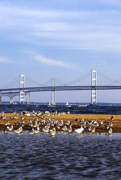 "Photo: Chesapeake Bay Bridge, connecting Maryland's Eastern and Western Shores. Credit: U.S. Department of Agriculture; Wikimedia Commons. Read more on the GenealogyBank blog: ""Maryland Archives: 125 Newspapers for Genealogy Research."" https://blog.genealogybank.com/maryland-archives-125-newspapers-for-genealogy-research.html"