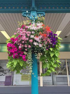 Suspension fleurie avec fleurs d'été, gare Saint-Lazare, Paris (13e)