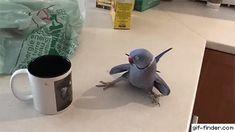 Parakeet Falls in Love With Coffee Mug