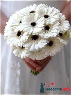 gerbera daisy white with blue centre - Google Search