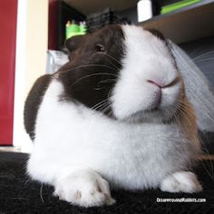 I love disapproving rabbits.  Lop ears especially!