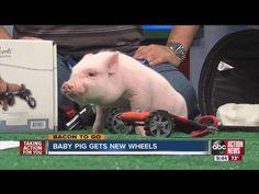 Chris P. Bacon on ABC Action News