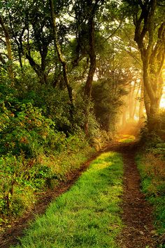 ♥The joys of nature. Beautiful World, Beautiful Places, Amazing Places, Beautiful Forest, Nature Aesthetic, English Countryside, Belle Photo, Beautiful Landscapes, Paths