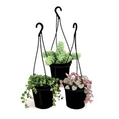 3.5 in. Assorted Succulent Hanging Basket (3-Pack)-0881006 - The Home Depot