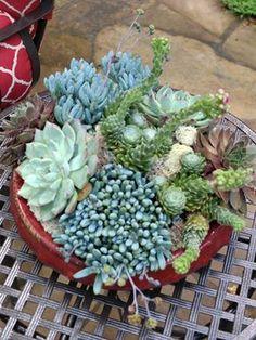 Summer Succulent Container Garden