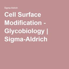 Cell Surface Modification - Glycobiology | Sigma-Aldrich