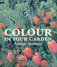 Color in Your Garden: Penelope Hobhouse: 9780711220584: Amazon.com: Books