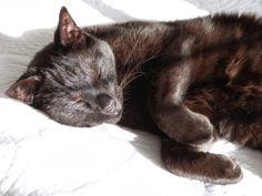 Het Brocante-Schelpenhuisje: Luie kat in het voorjaarszonnetje