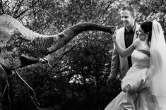Things do go wrong at weddings.  I have never had any serious drama at a wedding, apart from the occasional bad weather, the dress rips or the pastor forgets.  Oh and a few close encounters with wild animals.  Like a stand off with a couple of rhinos or the time we got chased by a lioness.  Sometimes I capture a wacky moment, sometimes the client wants a wacky photo, but mostly I come up with some wacky ideas. #wackywednesdays #wildanimals #weddingphotos #southafrica #imageswithspunk Elope Wedding, Farm Wedding, Dream Wedding, Female Photographers, Best Wedding Photographers, Photography Awards, Wedding Photography, South African Weddings, Close Encounters
