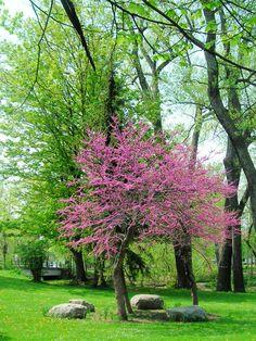 Springtime is Buffalo, NY  Cazenovia Park 05.13.11
