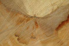 Chopped Wood Art 13