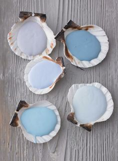 Color palette for kitchen, guest bathroom || sally sells shade sample sea shells by the sea shore!