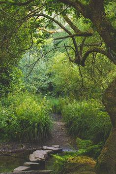 Beautiful woodland walk in Jersey, Channel Islands #EscapetoJersey