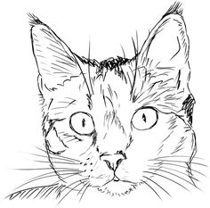 Drawing ideas animals cats ideas for 2019 Animal Sketches, Art Drawings Sketches, Animal Drawings, Easy Drawings, Drawings Of Cats, Animal Illustrations, Simple Cat Drawing, Cat Face Drawing, Realistic Cat Drawing