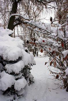 Thus it begins.. | Flickr - Berbagi Foto! Winter Love, Fall Winter, Beautiful Winter Scenes, Winter Schnee, Let It Snow, Winter Photography, Winter Landscape, Country Life, Winter Wonderland