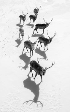 2017 National Geographic Travel Photographer of the Year | National Geographic