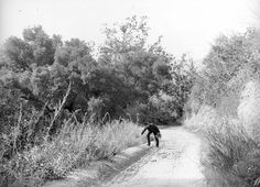 man picks wildflowers on a Griffith Park road, circa 1900.