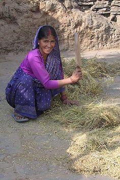 woman farmer threshing grain, India