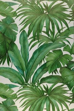 This exclusive Versace design wallpaper turns any room of your home into a tropical palm garden. It's incredibly realistic, inviting us to touch th. Palm Wallpaper, Wallpaper Samples, Pattern Wallpaper, Green Wallpaper, Print Wallpaper, Plant Painting, Plant Art, Tropical Art, Tropical Leaves