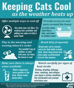 Summer is arriving in many parts of the country, and you can take these steps to keep cats cool in the summer heat.