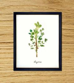 Thyme watercolor painting, Botanical painting, Herbs, Kitchen art, Herb illustration, Wall art for kitchen, 5x7