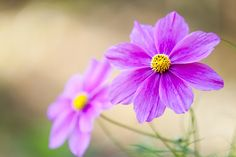 Cosmos by marbee .info, via 500px