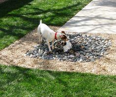 backyard ideas for dogs best dog friendly backyard ideas on dog yard, 8 great backyard ideas to delight your dog the bark, top dog friendly backyards healthy paws, backyard ideas for dogs sunset magazine, Dog Friendly Backyard, Dog Backyard, Backyard For Kids, Backyard Projects, Backyard Landscaping, Backyard Ideas, Landscaping Ideas, Backyard Shade, Backyard Designs