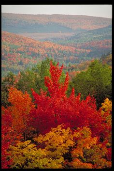 Fall in New Brunswick, Canada Leaves Changing Color, Atlantic Canada, O Canada, Prince Edward Island, New Brunswick, Nature Pictures, Amazing Nature, East Coast, Beautiful Landscapes