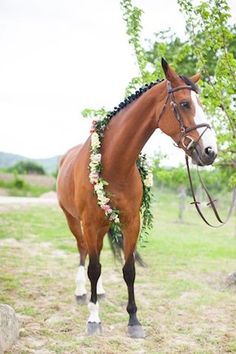 Flower garland for a horse | Roberta Facchini Photography | see more on: http://burnettsboards.com/2015/11/italian-bridal-preparation-inspiration/