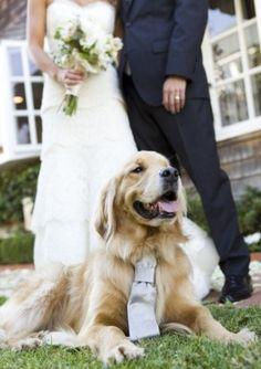 animais-de-estimação-no-casamento 14