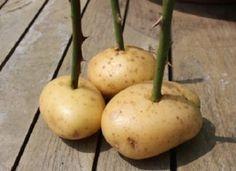 20 astuces de jardinage qui vont rendre vos voisins jaloux