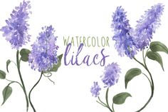 Watercolor Lilacs by Digital Press Creation on Creative Market