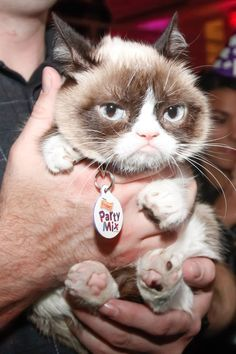 Pin for Later: Movie Star Grumpy Cat Has Some Life Advice For You
