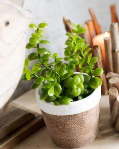 White Plants, Flower Pots, Sea Shells, Caribbean, Planter Pots, Make It Yourself, Cement, Spring Summer, Decoration