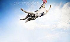 Alicja Zmyslowska Dog Photography   Flickr - Photo Sharing!