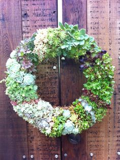 Living Succulent Wreath  19 Circle by MarinWreaths on Etsy. , via Etsy. $180!!!!