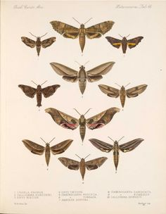 Butterflies and Moths,  Image number:bca_15_03_00_076