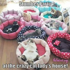 The funniest part about this, is that in reality the cats would be sleeping anywhere except the cat beds!