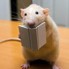 #book #librarians #readingisfundamental #rats #books