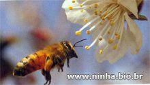 Abelha voando perto da flor                                                                                                                                                      Mais