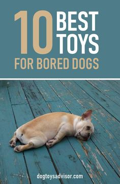 Is your dog bored? Give your dog more mental stimulation! Here's 10 best toys to keep your dog busy and relieve boredom. Small Dog Toys, Diy Dog Toys, Best Dog Toys, Best Dogs, Dog Boredom, Boredom Busters, Stimulating Dog Toys, Dog Gadgets, Durable Dog Toys