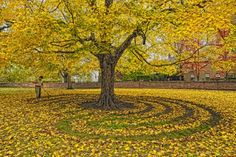 A labyrinth of sugar maple leaves around the tree at the Harmonist cemetery, New Harmony, Indiana. Created by Ben Nicholson Camelia Tree, Labyrinth Garden, Autumn Scenery, Garden Art, Garden Ideas, Patio Ideas, Outdoor Ideas, Outdoor Spaces, Environmental Art