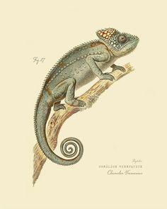 Vintage Reptile Chameleon  Chameleo Verrucosus by OrangeClipart, $14.00