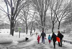 Fun: Parents arrive with their children and toboggans to a snowy Central Park in New York today